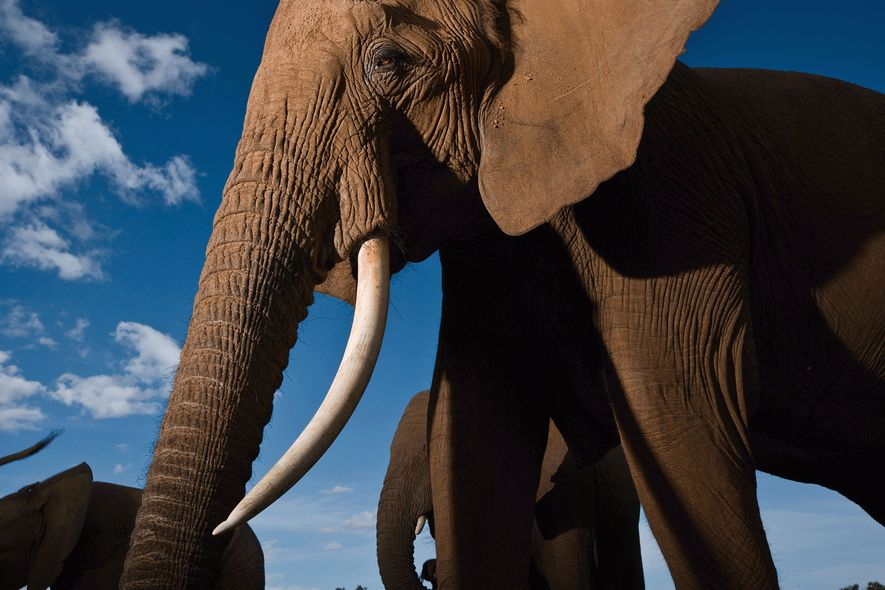Elephants are highly social and form tight family groups. Here, a family enjoys time together at ...