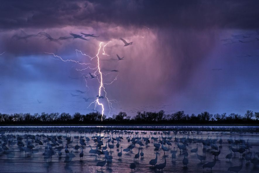 Grassland birds of the Great Plains wade by the water's edge as a storm begins to ...