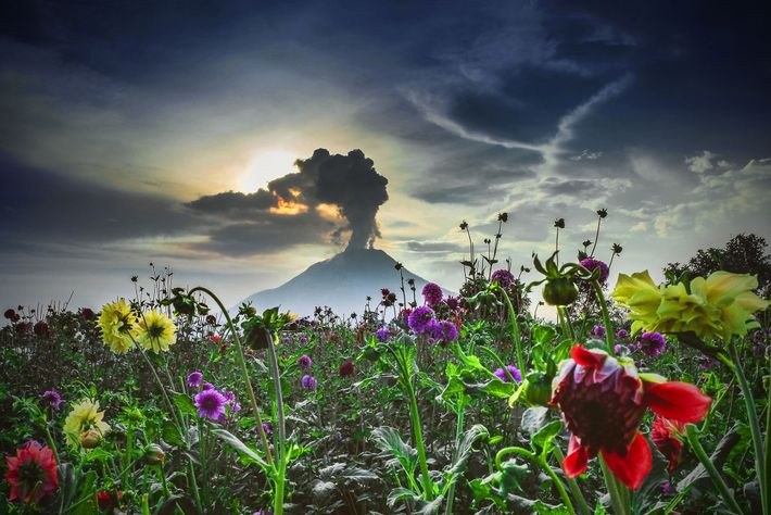 Sinabung volcano in western Indonesia slumbered for some 400 years before roaring awake in August 2010. ...