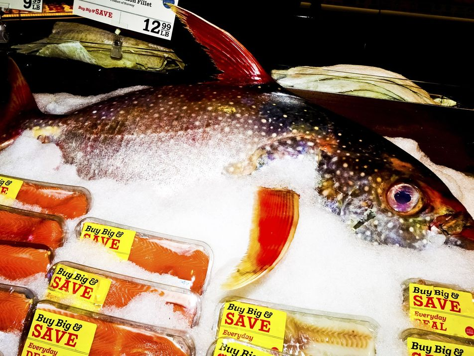 What is seafood fraud? Dangerous—and running rampant, report finds