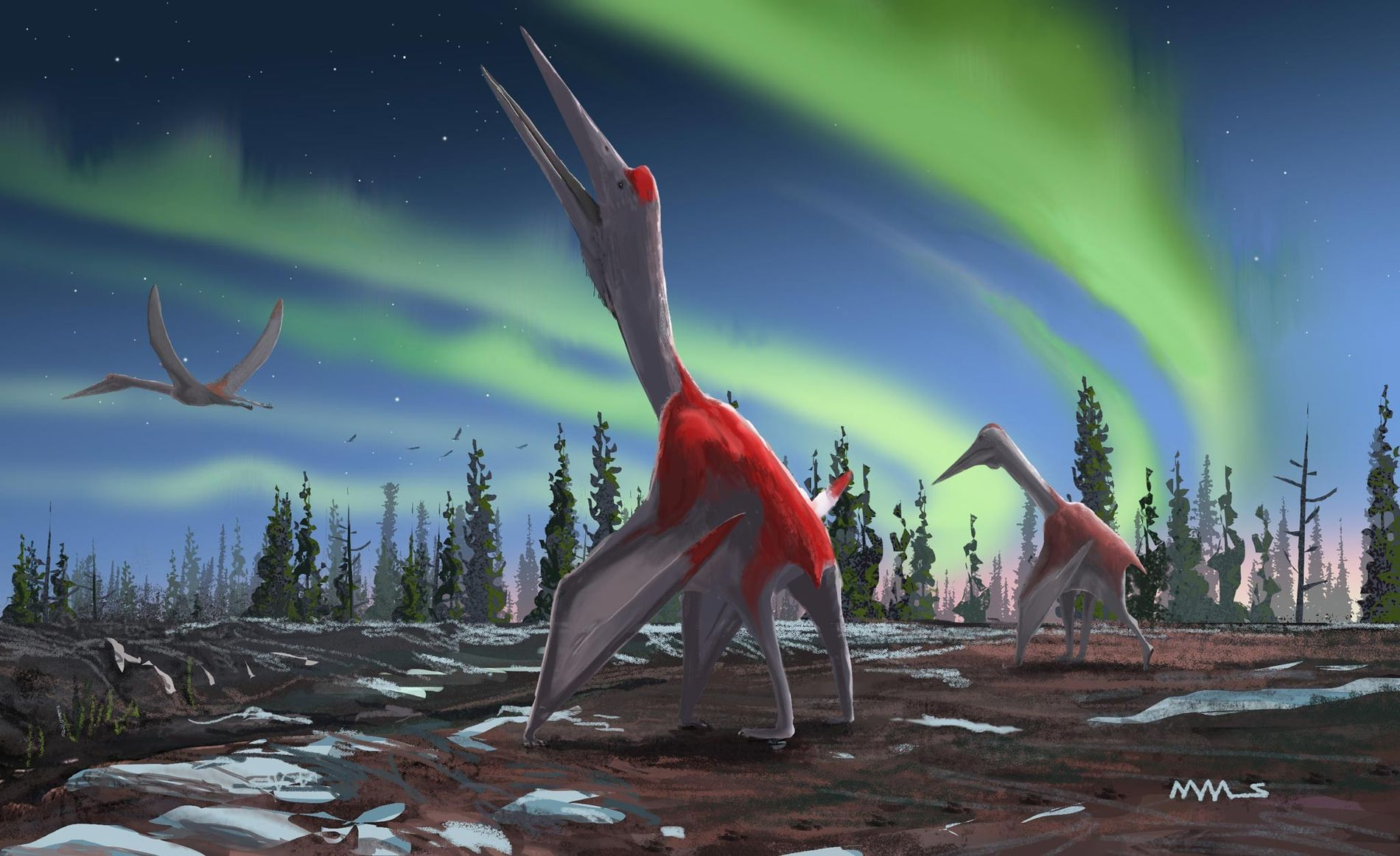 A new study in the Journal of Vertebrate Paleontology describes a new pterosaur called Cryodrakon boreas, 'frozen dragon of the north winds.' The flying reptile had a wingspan of at least 16 feet and may have grown to a wingspan of up to 33 feet, the size of its relative Quetzalcoatlus northropi.