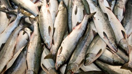 Can the Ocean Feed a Growing World?