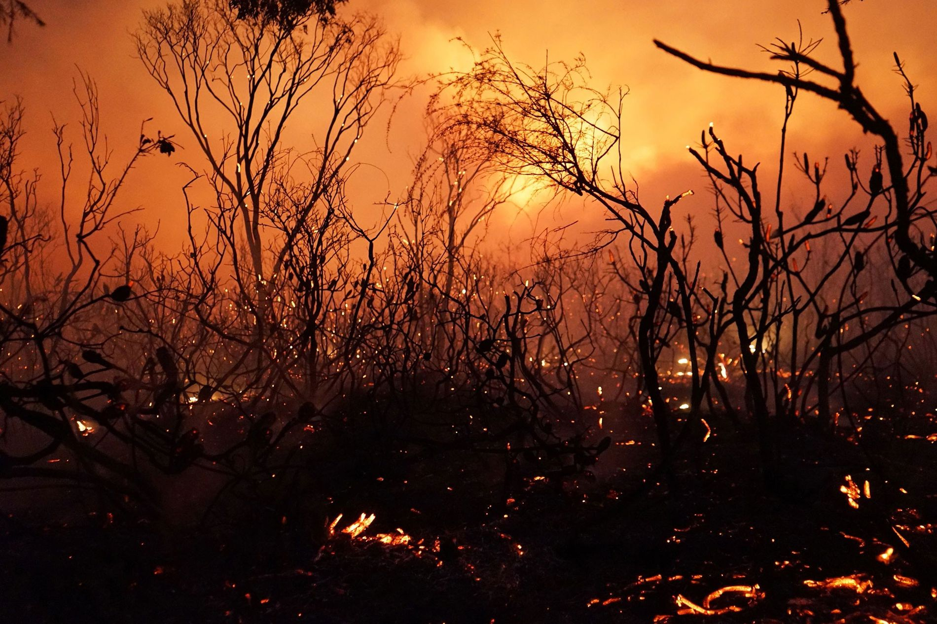 A blaze moves through Deepwater National Park in Queensland on November 28, 2018. Thousands of people ...
