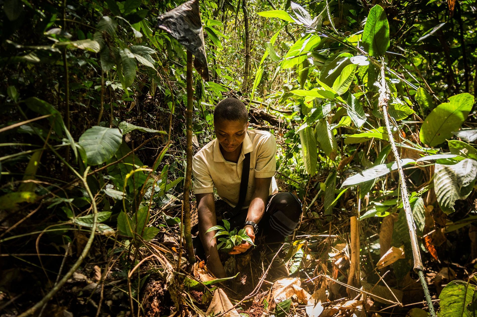 "Noël Nakere Dobo Nkouli finishes planting an ebony sapling in the Congo Basin forest of southeastern Cameroon. ""These trees,"" he says, ""are our heritage."""