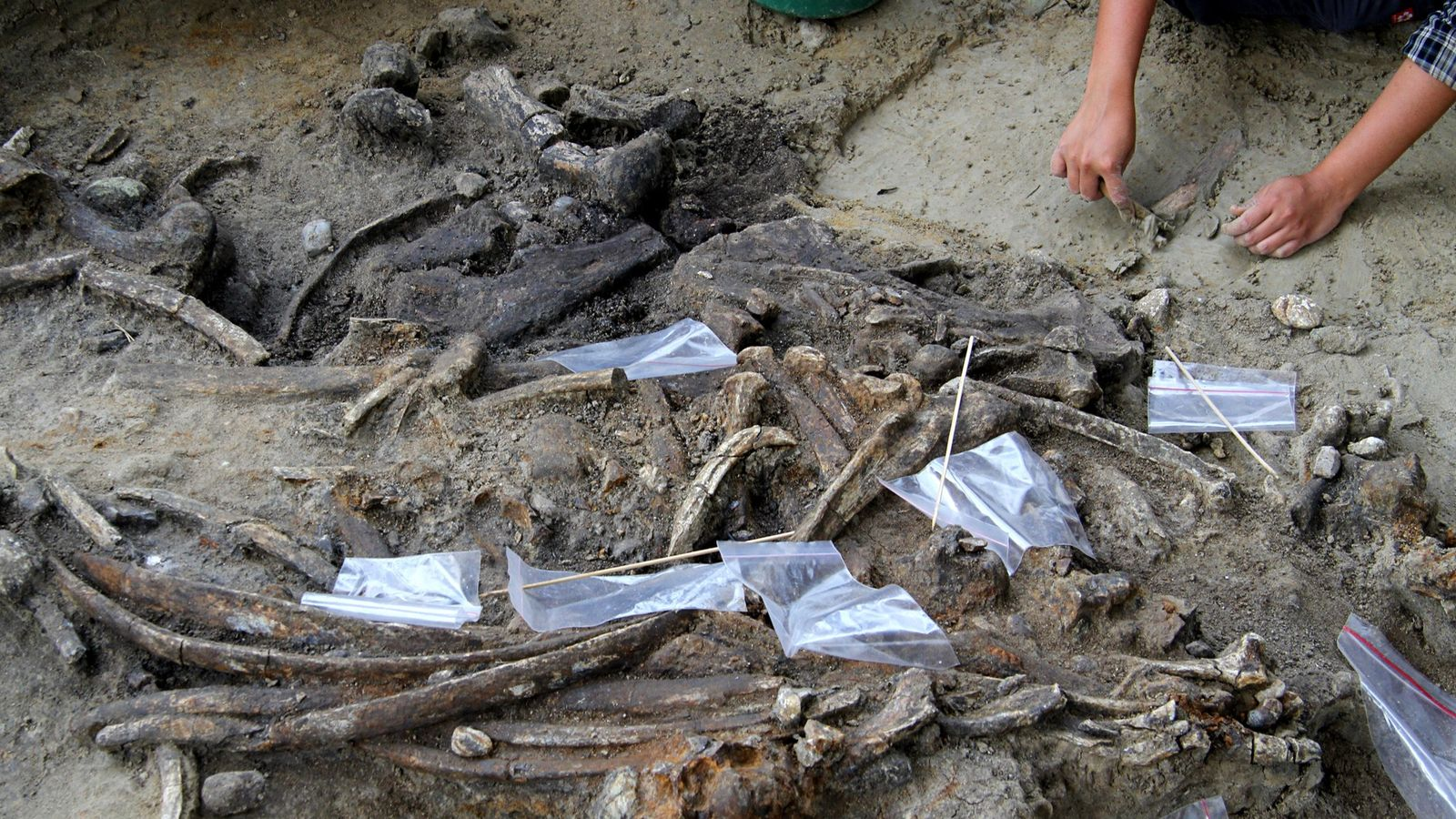 Researchers found a 700,000-year-old site on the Philippine island of Luzon where unknown hominins butchered a ...