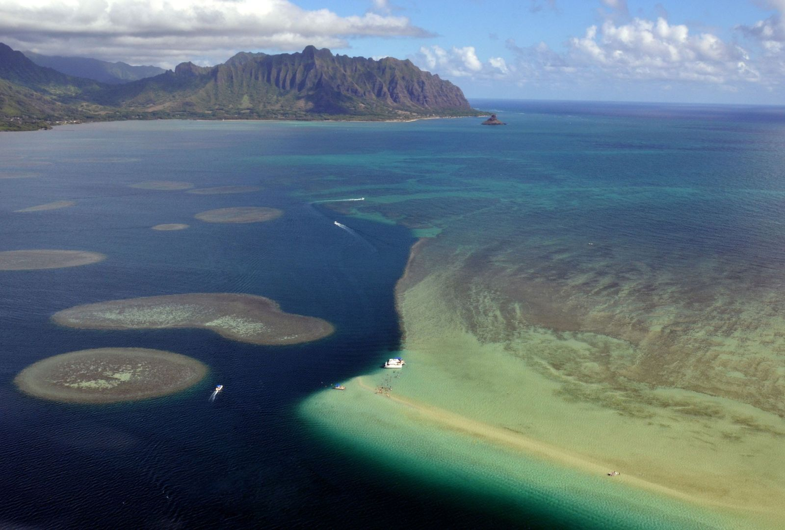 Hawaii Enlists Urchins to Help Corals Resist Algae Invasion