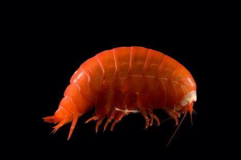 Creatures in the deepest trenches of the sea are eating plastic