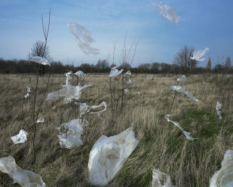 Microplastics are raining down from the sky
