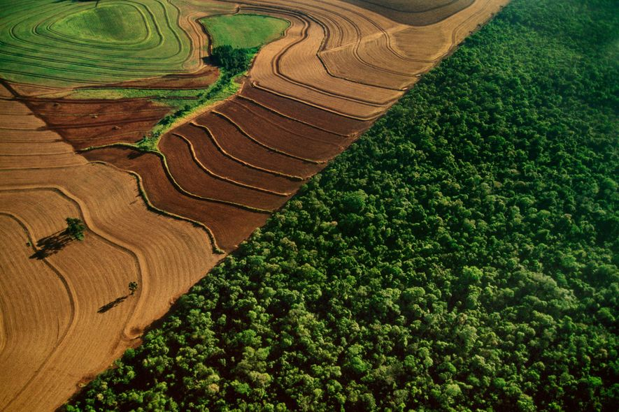 Cropland borders natural rain forest in Iguacu National Park, Brazil. Conservationists worry what happens next in …