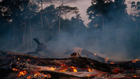 The rate at which rainforest is being cleared in the Brazilian Amazon has increased in recent ...