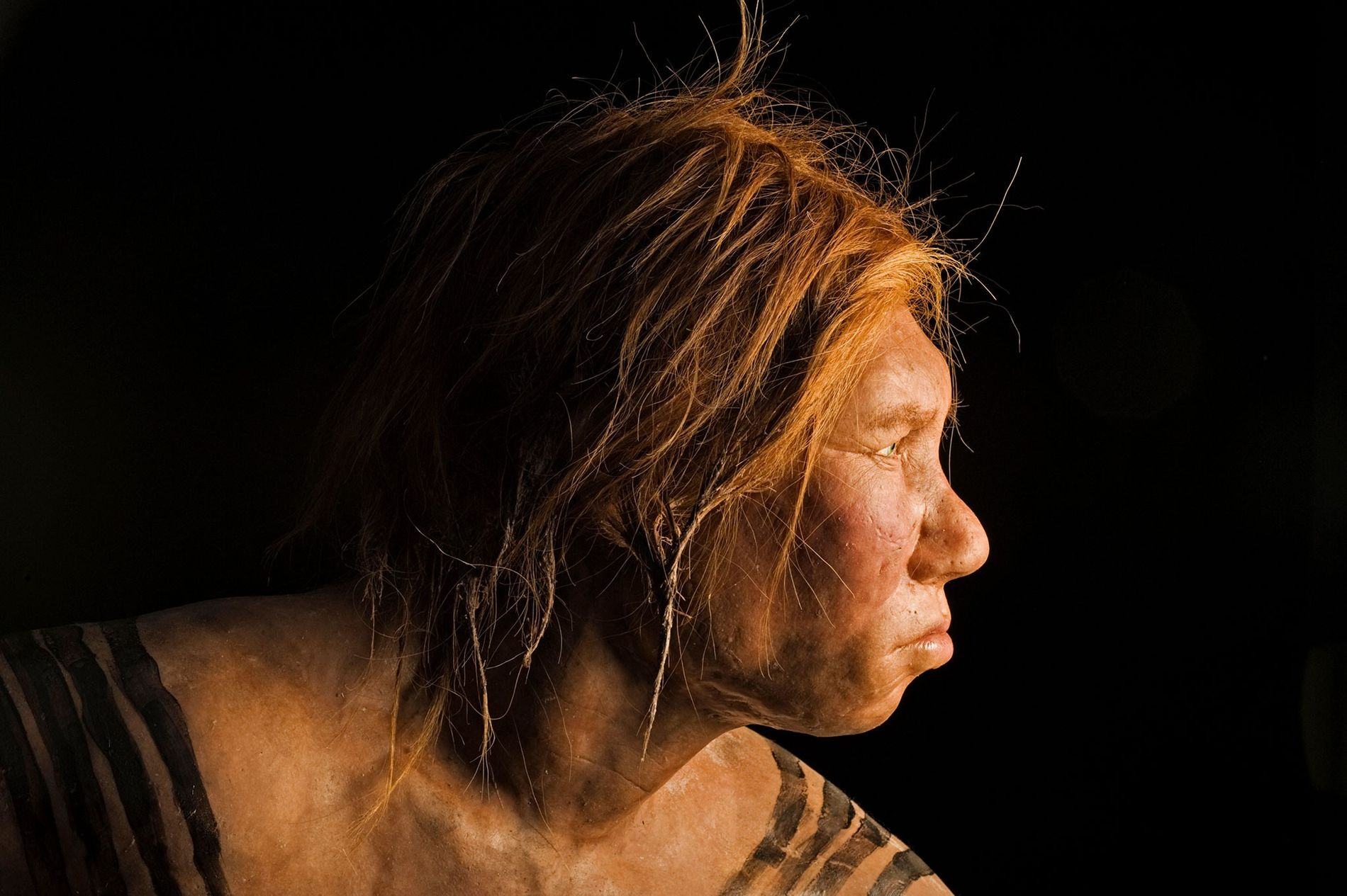 Unveiled in 2008, this reconstruction of a Neanderthal female was the first made using ancient DNA evidence.