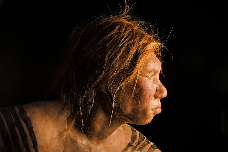 Unveiled in 2008, this reconstruction of a Neanderthal female was the first made using ancient DNA ...