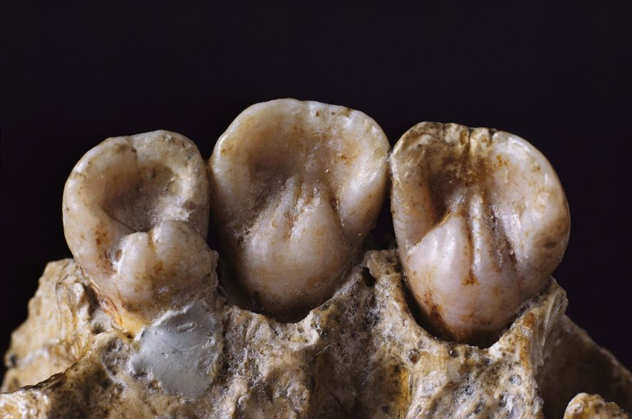 Neanderthal teeth reveal intimate details of daily life