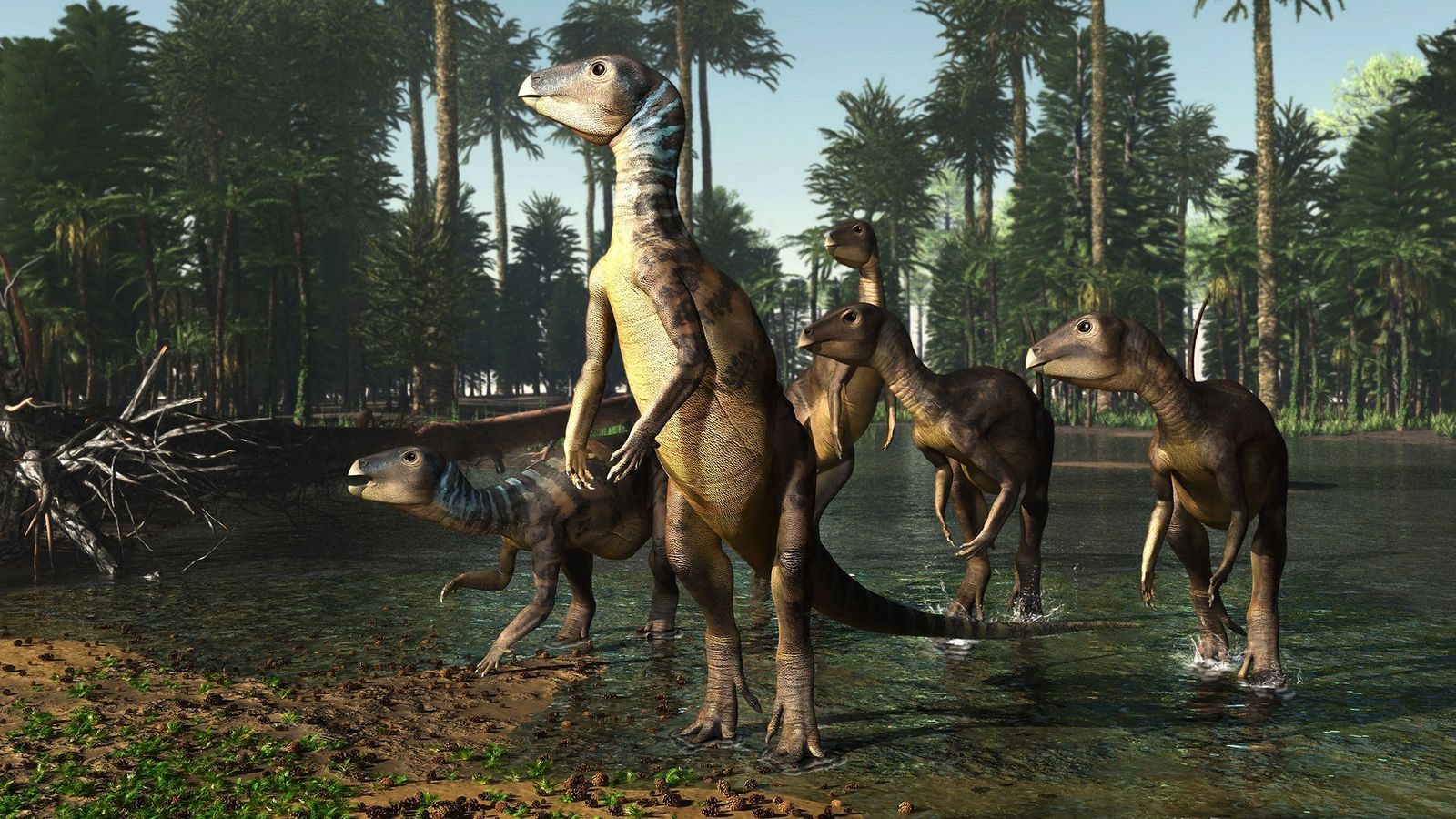 A herd of 'Weewarrasaurus' wade through a shallow lake in what is now Australia, in an ...