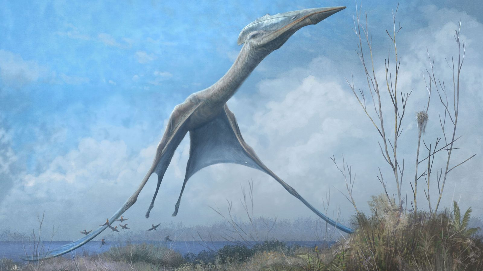 An azhdarchid pterosaur takes flight in Romainia in an illustration. Fossils recovered from the fire-damaged Museu ...
