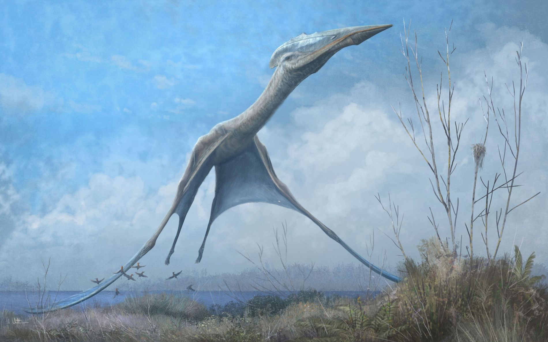 An azhdarchid pterosaur takes flight in Romainia in an illustration. Fossils recovered from the fire-damaged Museu Nacional in Brazil show that flying reptiles from this same group also soared over Antarctica in the late Cretaceous.