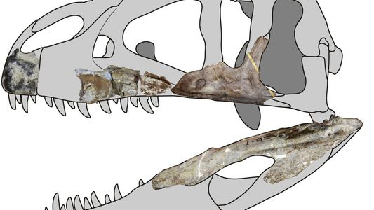 Huge new 'shark toothed' dinosaur found