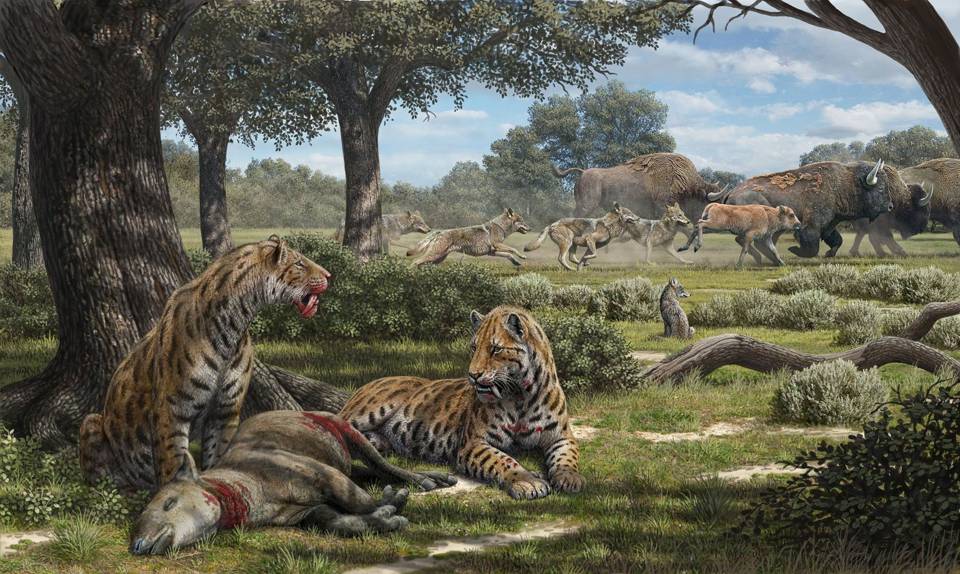 Dappled by leafy shade, sabre-tooth cats feast on a forest herbivore while dire wolves chase bison ...