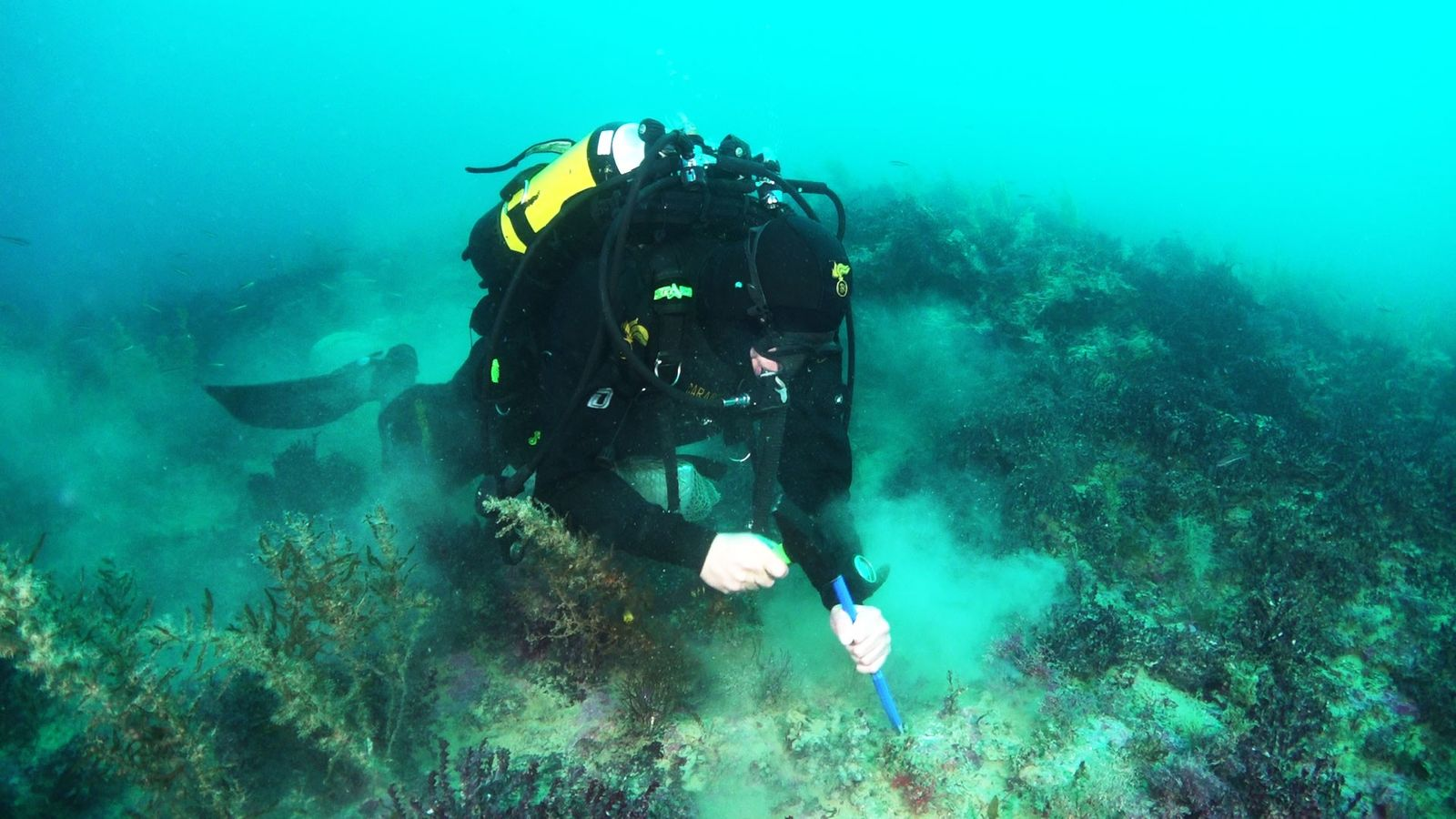 A diver from the Italian army, Carabinieri, collects rocks from one of the newfound volcanoes, Actea, ...