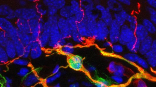 Newly discovered organ may be lurking under your skin