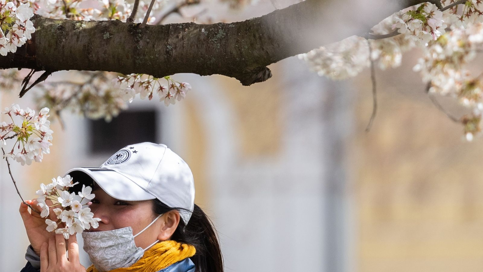 A woman wearing a mouthguard smells the blossoms of an ornamental cherry on the banks of ...