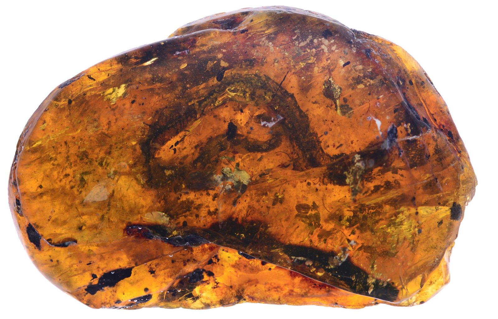 First Baby Snake From Dinosaur Era Found in Amber