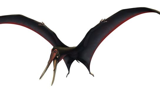 The newly named Targaryendraco wiedenrothi spreads its wings in an illustration.