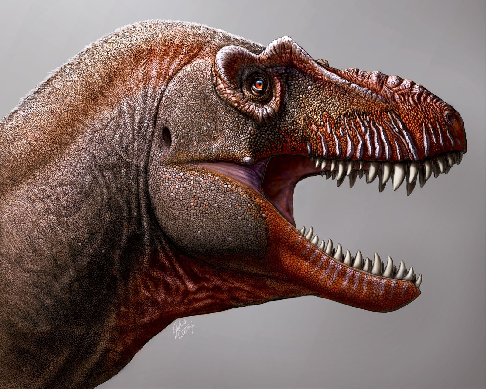 'Reaper of Death' tyrannosaur discovered in Canada