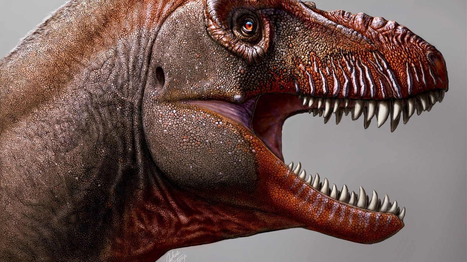 To the untrained eye, many tyrannosaurs look like twins. But Thanatotheristes has several distinctive features that ...