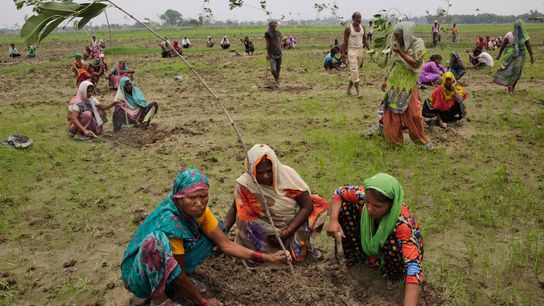 01_tree_planting_india