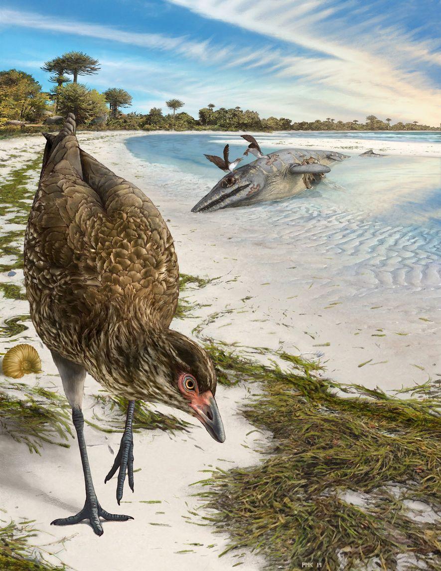 An artist's reconstruction of the world's oldest modern bird, Asteriornis maastrichtensis, in its original environment. Parts ...