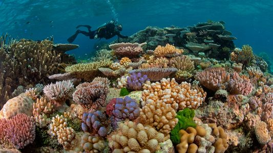 Photos From The Great Barrier Reef