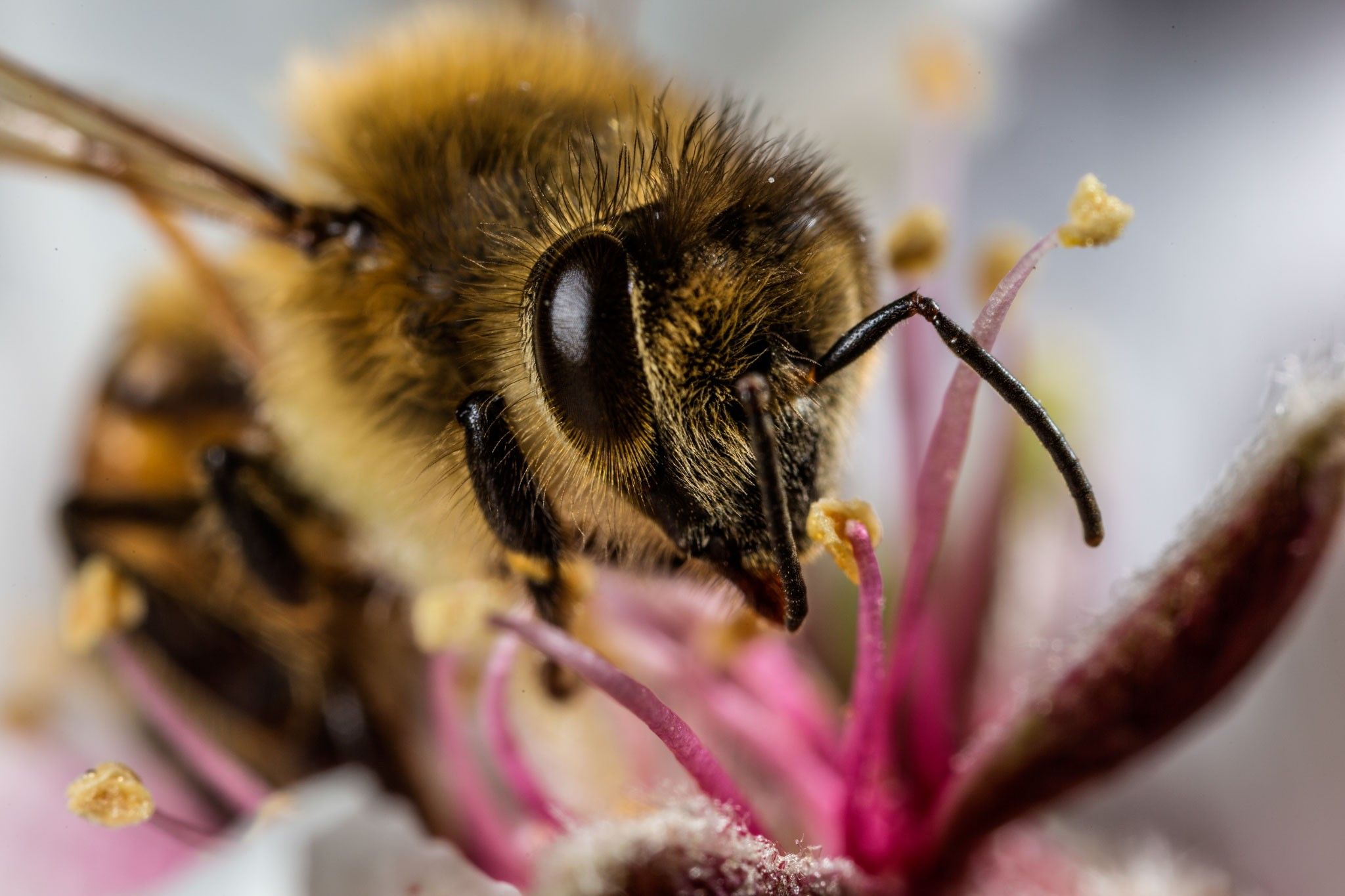 10 sweet photos of honeybees | National Geographic