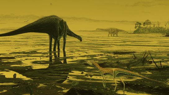 01scotlanddinosaur