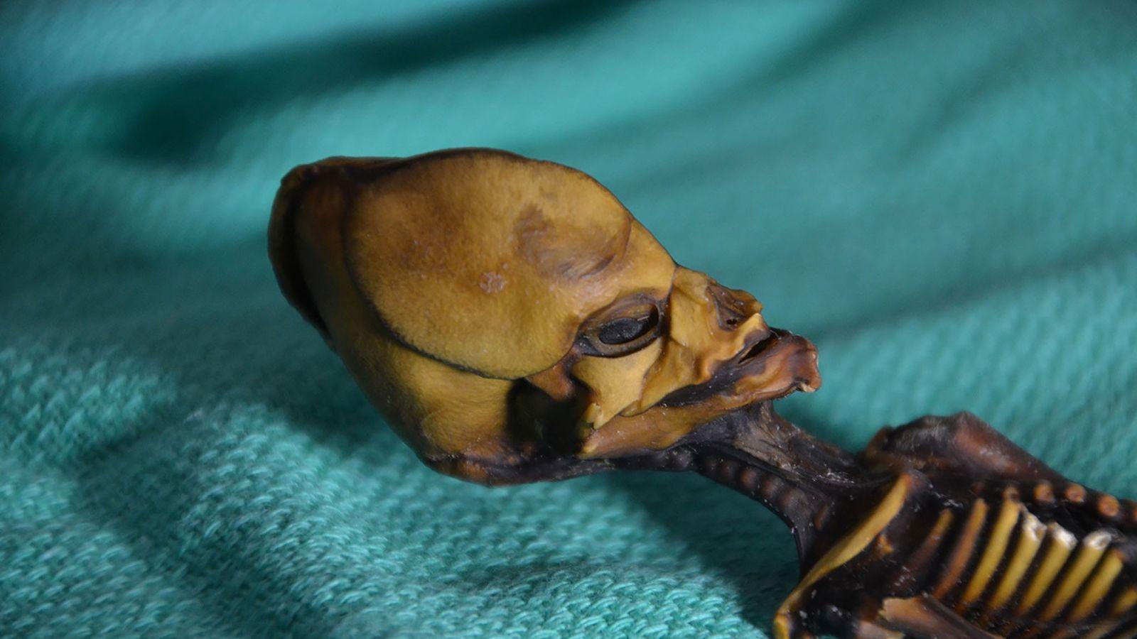 Ata, the six-inch mummy found in Chile's Atacama desert.