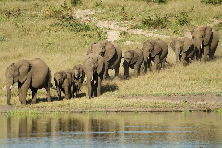 Wild African elephants are sold to zoos around the world. On August 27, a majority of ...