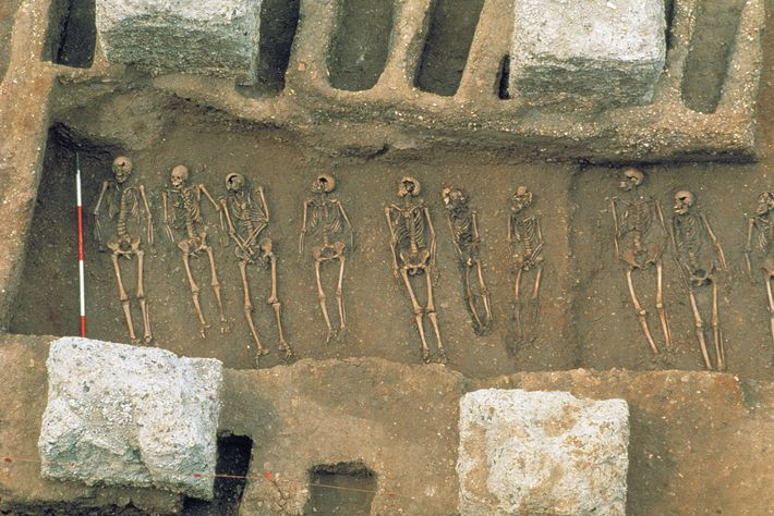 In 1986, archaeologists uncovered a mass grave in East Smithfield, London, used to bury victims of ...