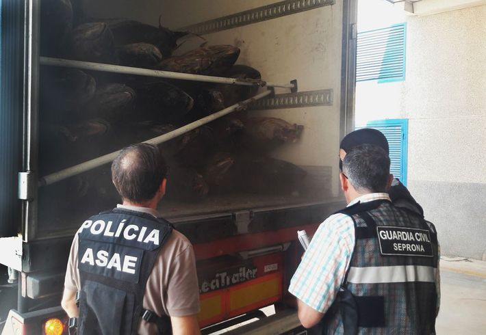 Police examine tuna stored in the back of a transport truck.
