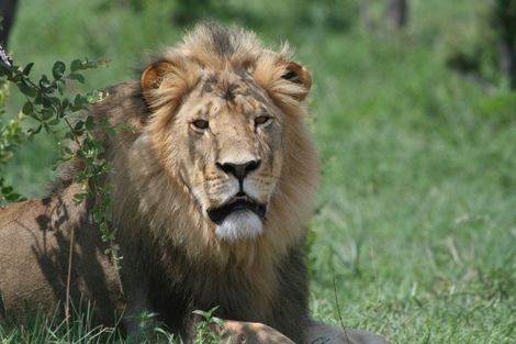 Meet the Man Who Knew Cecil the Lion Best