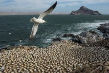 The Shiant Isles are home to 350,000 seabirds, 10 species of which are featured in the ...