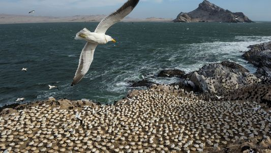 How Seabirds Navigate by Smell... and Other Amazing Facts