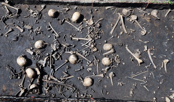 Remains of victims from the Bronze Age battle at Tollense.