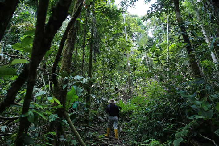 Scientists search in Ecuador for wild relatives of potato, eggplant, rice, and sweet potato.