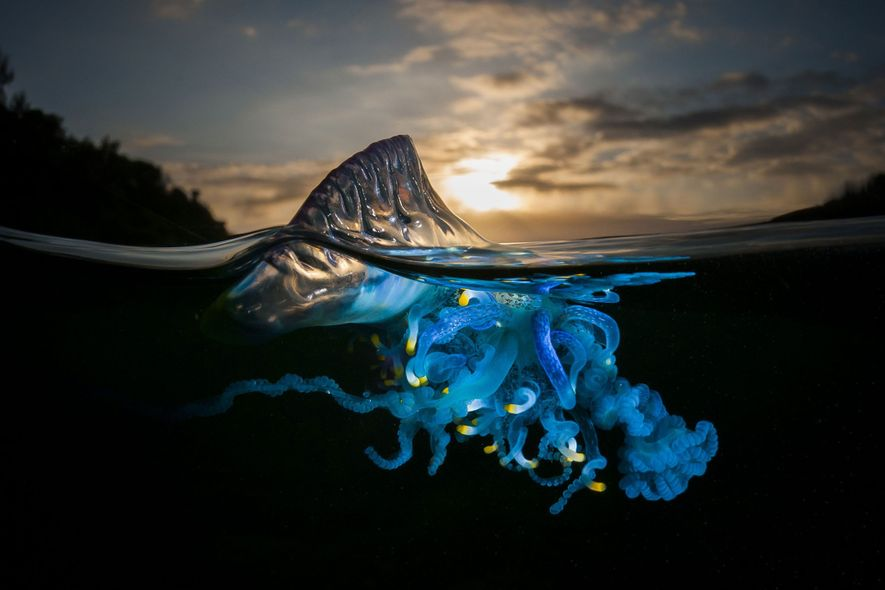 Vibrant Images of Nature's Most Colourful Creatures