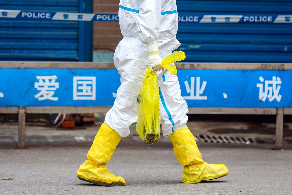 More Chinese push to end wildlife markets as coronavirus outbreak grows