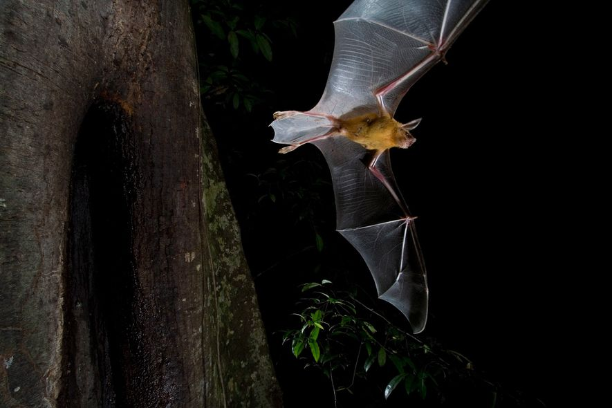 Why some bats hunt during the day