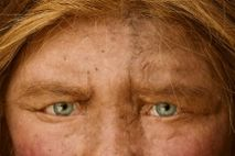 These piercing eyes belong to a reconstruction of a Neanderthal, an ancient human relative that shared ...