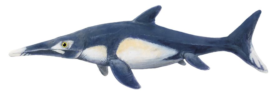 An illustration shows the ichthyosaur 'Stenopterygius' as it may have appeared in life. Researchers don't know ...