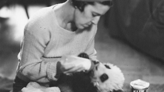 American socialite and fashion designer Ruth Harkness in 1936, cradling the giant panda bear cub Su-Lin ...