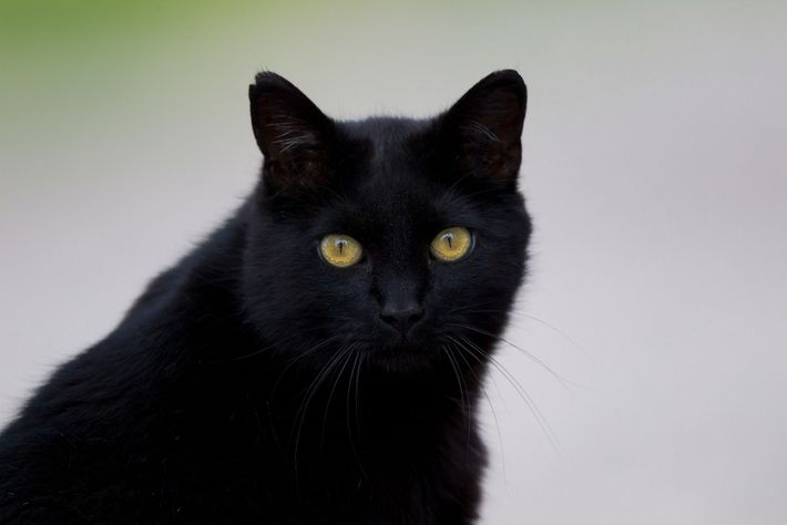 Black cats are also seen as unlucky in many European cultures.